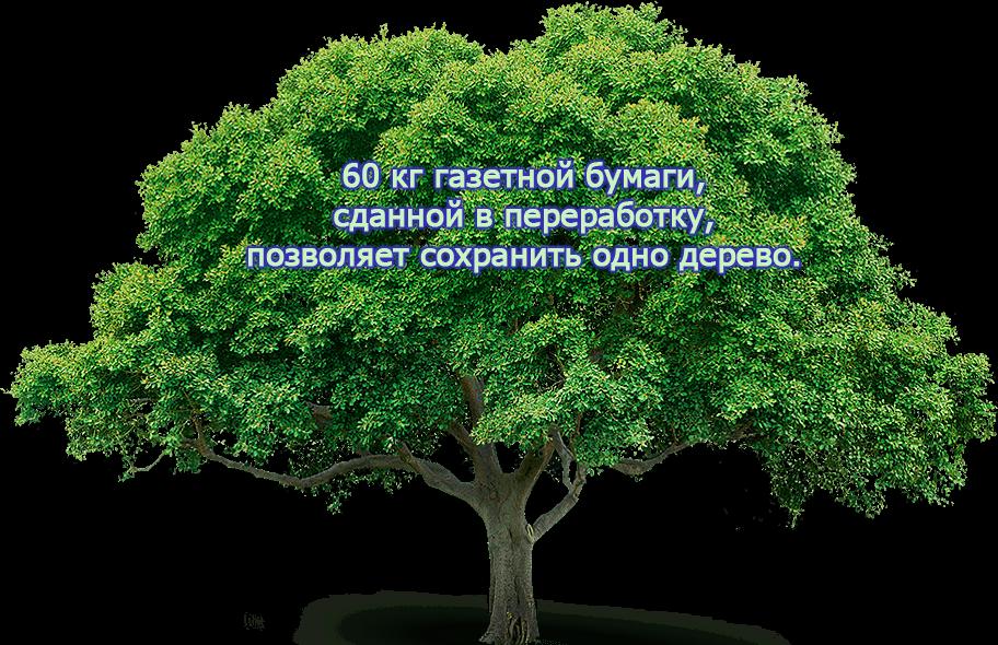 Бумага из дерева