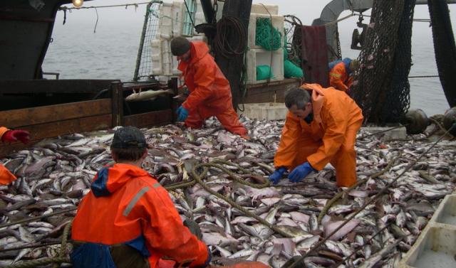 Рыбопромышленный комплекс Мурманска