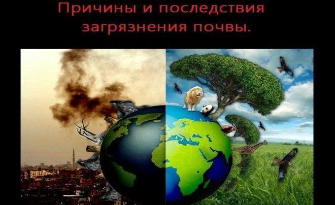 Последствия загрязнения почвы