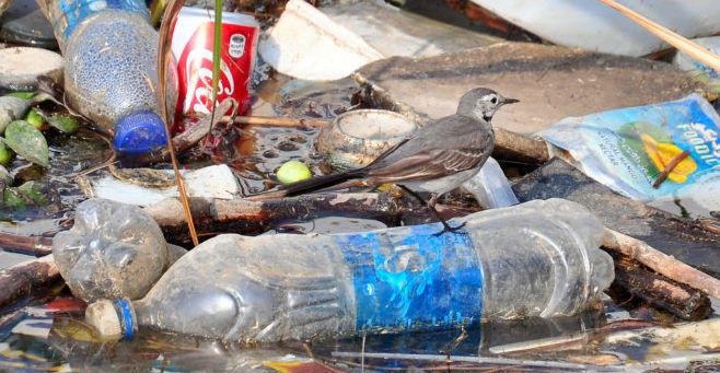 Вред окружающей среды от пластика